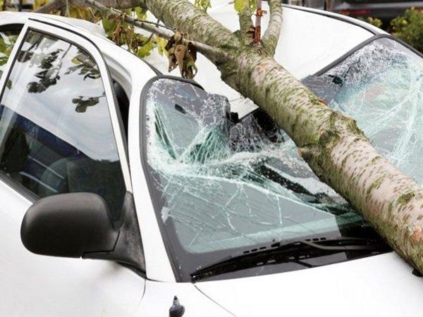 Упавшее старое дерево изуродовало два автомобиля в Ростове