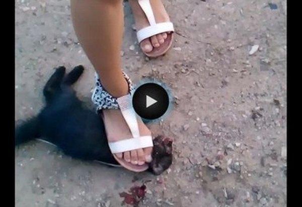 В Ростове девушка-живодерка издевалась над котенком и справляла на него нужду. Фото
