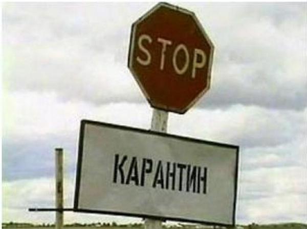 В трех районах Ростовской области снят карантин по бешенству