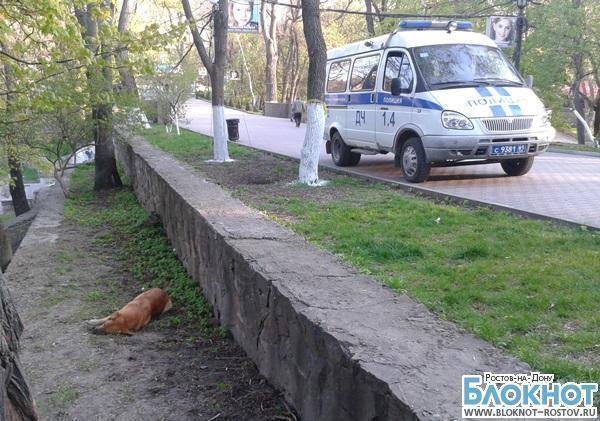 Ростовские зоозащитники обвиняют сотрудника службы отлова собак в незаконном убийстве животного