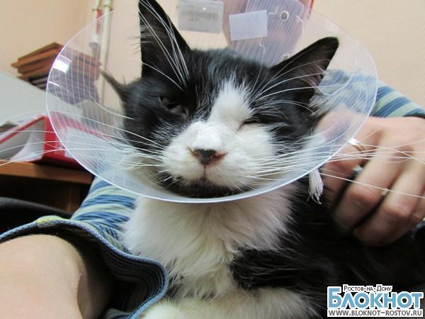 Московские ветеринары восстановили раздробленную челюсть коту из Ростовской области