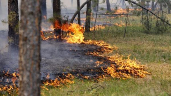 Наивысший класс пожароопасности объявлен в Ростовской области
