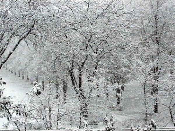 Сильный снегопад в Ростовской области сохранится до вечера 30 января