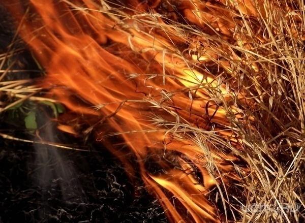 За сутки в Ростовской области 59 раз загоралась сухая растительность