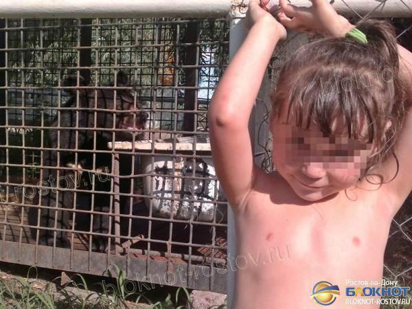 Медведь, откусивший руку 5-летней девочке в Ростовской области, мог находиться на базе незаконно