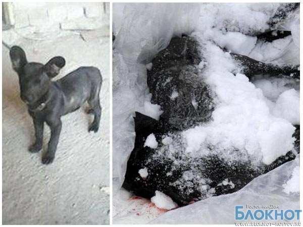 В Ростовской области живодер застрелил трех собак (ВИДЕО)