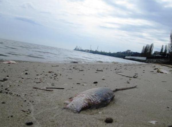 В Таганроге причиной появления на побережье мертвой рыбы стала операция «Путина»