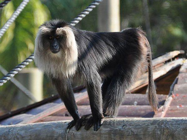 В ростовский зоопарк едут макаки из Израиля