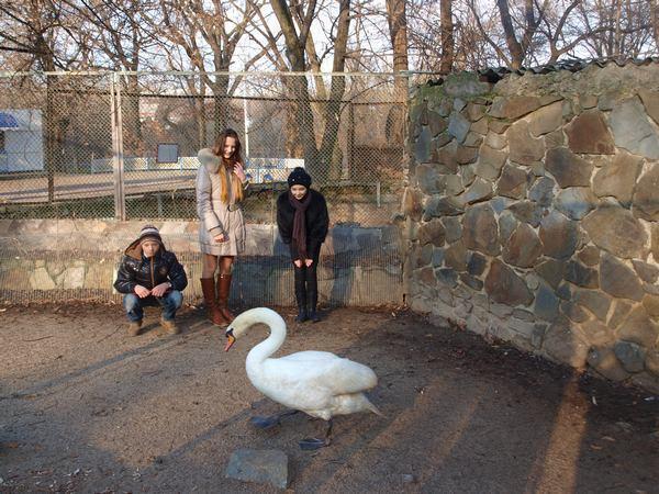 Лебедя, спасенного на замерзающем пруду в Ростове, назвали Олимпиадой