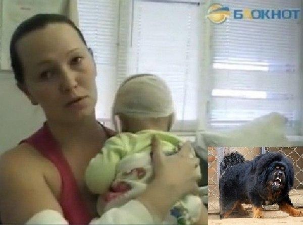 В Ростове возбуждено дело в отношении заводчиков мастифов, чьи собаки напали на прохожих