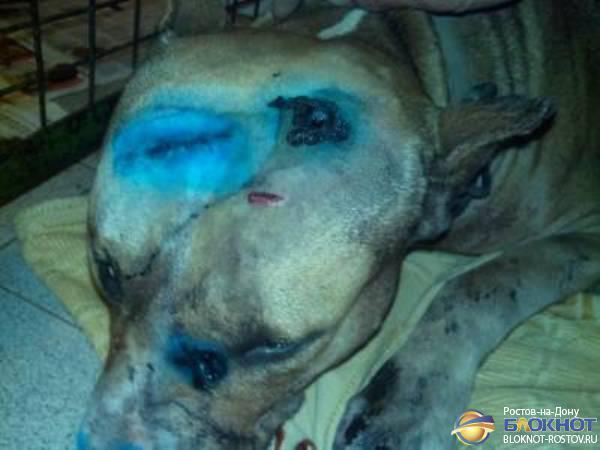 В Ростове живодеры нанесли псу ранения топором, а потом стреляли в него