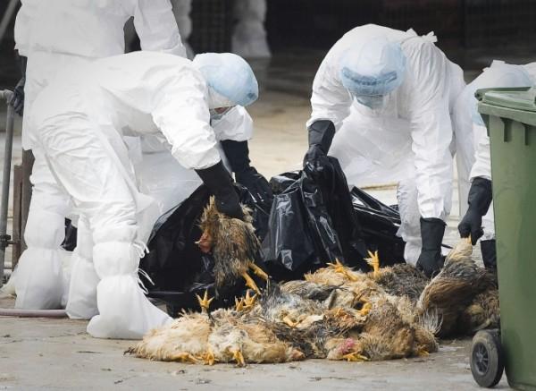 ВЕвродоне уничтожили 160 тыс. птиц
