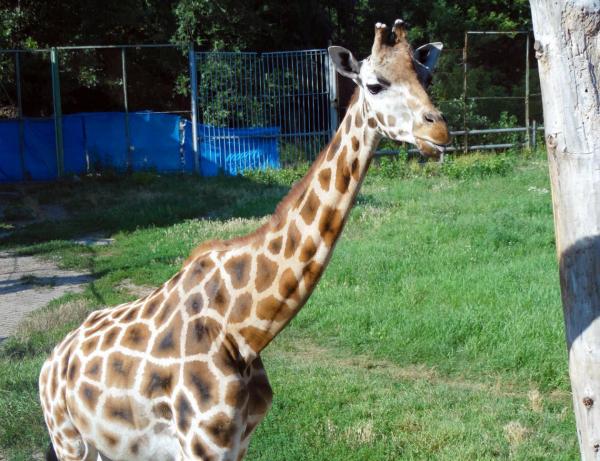 Зоопарк Ростова попал в ТОП-10 самых популярных в России