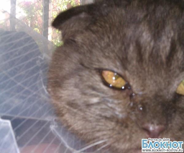 Ростовские ветеринары вставили коту искусственный хрусталик глаза