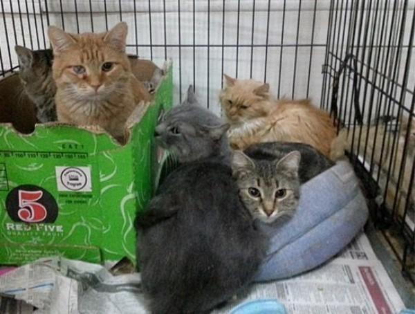 В Ростове после смерти пенсионерки в квартире остались запертыми 30 кошек