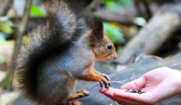Почти 80 человек пострадали от укусов диких животных на Дону
