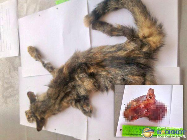 В Ростове возбуждено дело в отношении живодера, расчленившего кошку. Фото