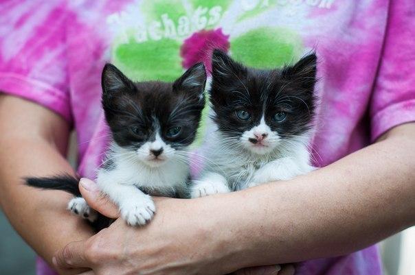 В квартире ростовчанки обитают больше тридцати кошек и собака