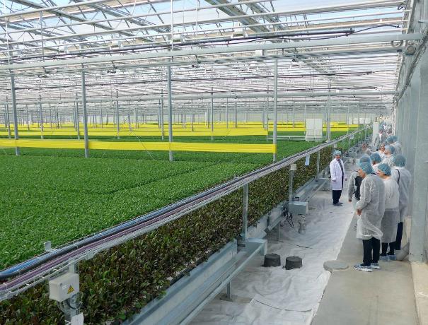 Тепличный комплекс за 6,5 млрд рублей построят в Ростовской области