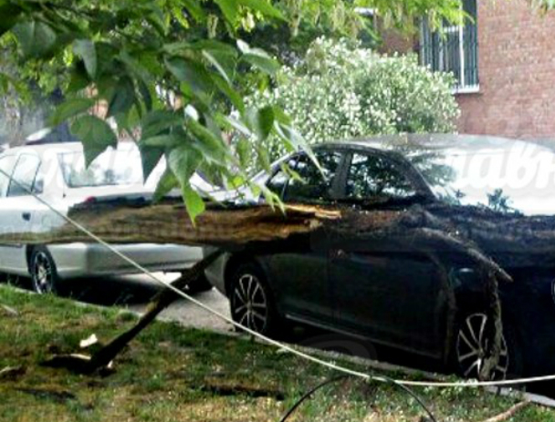 Огромное дерево рухнуло на машину «бессмертного» водителя в Ростове