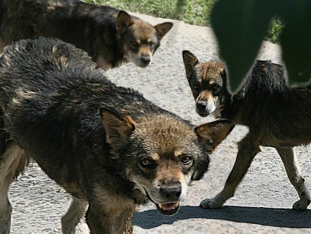 Стая собак загрызла до болевого шока возвращавшуюся с ночной работы женщину под Ростовом