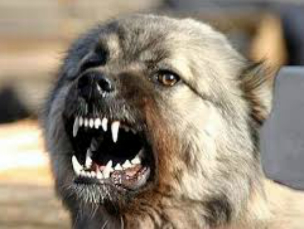 ВОрловском районе наребенка напала бешеная собачка