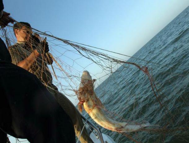 Убегая от погони на лодке, отчаянный рыбак проломил румпелем голову полицейскому в Ростове