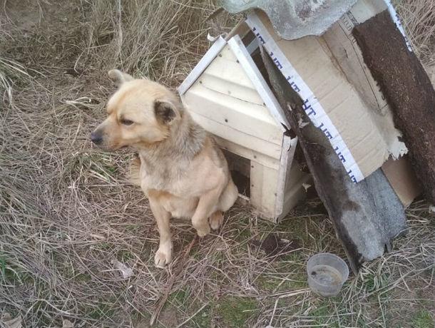 В Ростовской области пес Хатико больше года ждет хозяина в поле