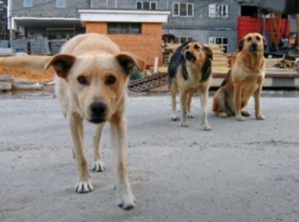 «Свиней можно убивать, а почему нельзя собак?» - ростовчане потребовали создать службу отлова животных