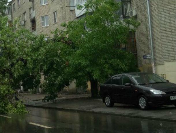 Рухнувшее дерево перегородило дорогу и постучало в окно жителям в Ростове