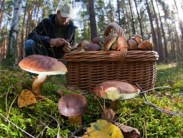 Трое мужчин отравились грибами, собранными в лесу Ростовской области