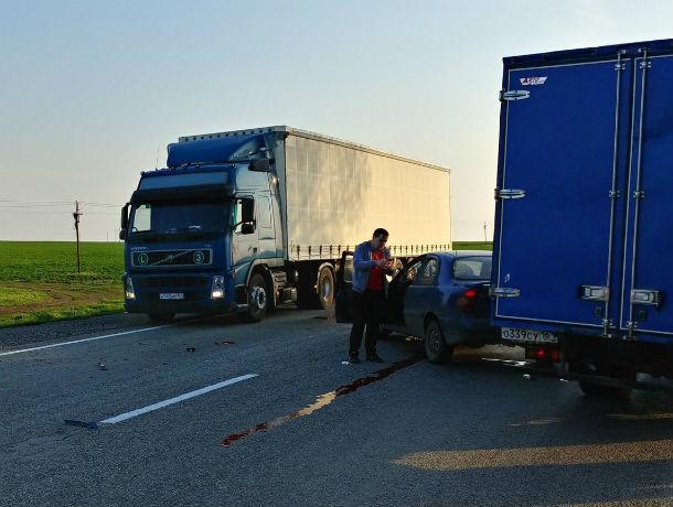 Злая собака едва не угробила водителей двух автомобилей, устроив ДТП под Ростовом