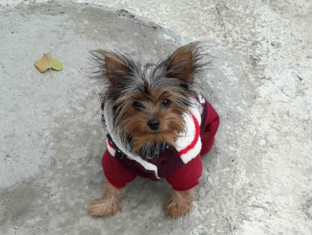 Ростовчанину за украденного щенка грозит два года колонии