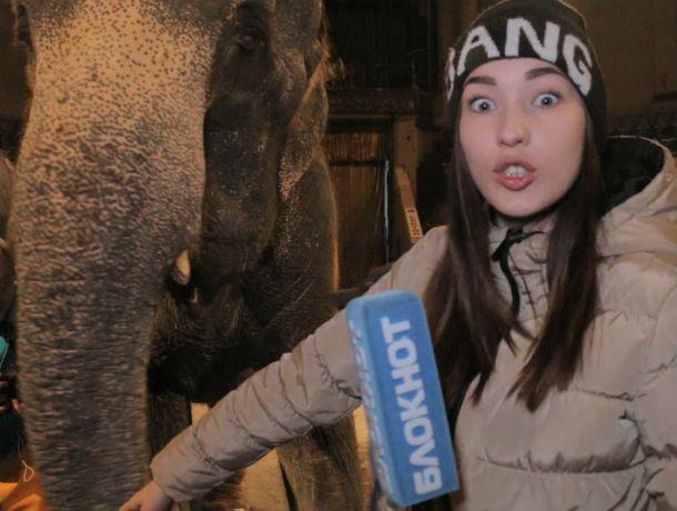 От поцелуя прекрасной Насти отказался капризный слон в Ростовском цирке