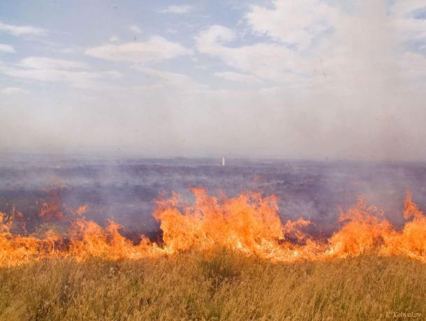 В Ростовской области огонь уничтожил 220 гектаров пшеницы