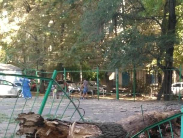 Жара спасла малышей от убийственного дерева на детской площадке Ростова