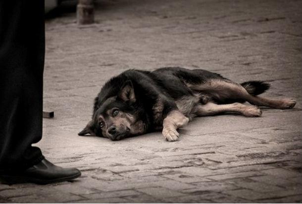 ВРостове нарынке живодеры травили собак наглазах удетей
