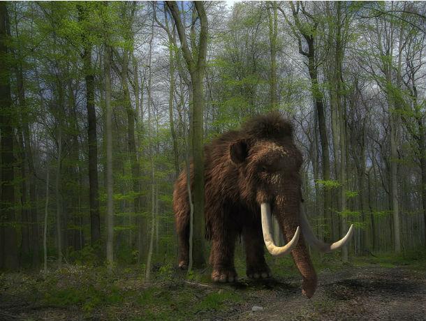 Ровесников мамонтов одомашнивают в Ростовской области