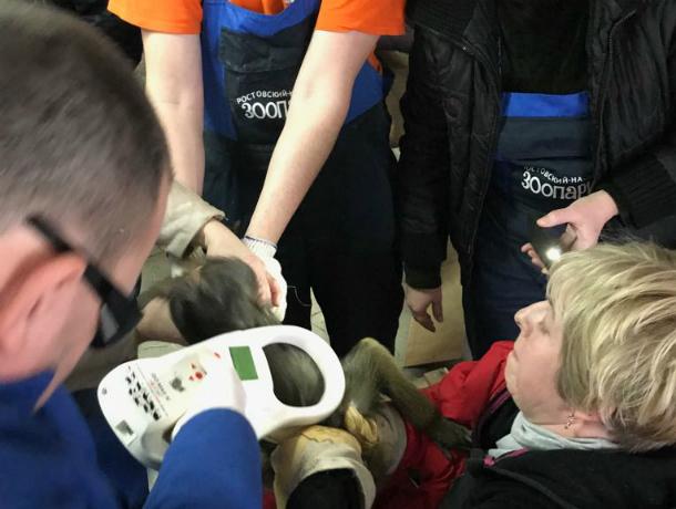 Спасенные отбраконьеров обезьяны иносухи стали обитателями Ростовского зоопарка
