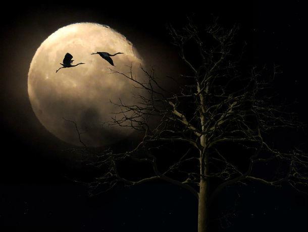 Таинственное сближение в ночном небе Луны с Марсом с нетерпением ждут ростовчане