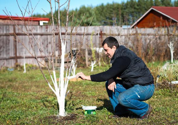 Ростовчанка попросила запретить побелку деревьев