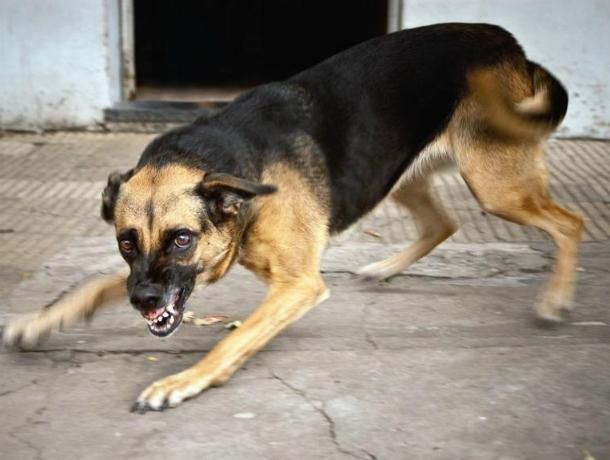 Агрессивная бродячая собака попыталась огрызть ногу молодому человеку на вечерней улице Ростова