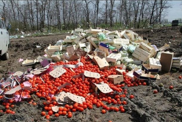 Четыре тонны помидоров, капусты и картофеля с калифорнийским вредителем раздавили бульдозером в Ростовской области