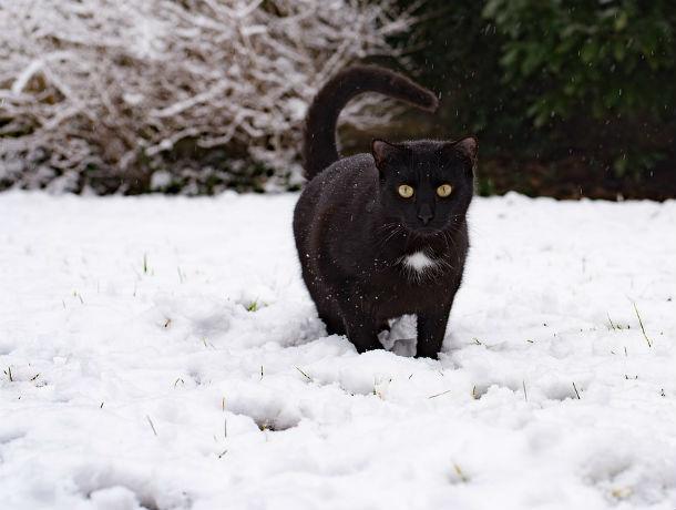 Внезапно для коммунальщиков на Ростов обрушится первый снег