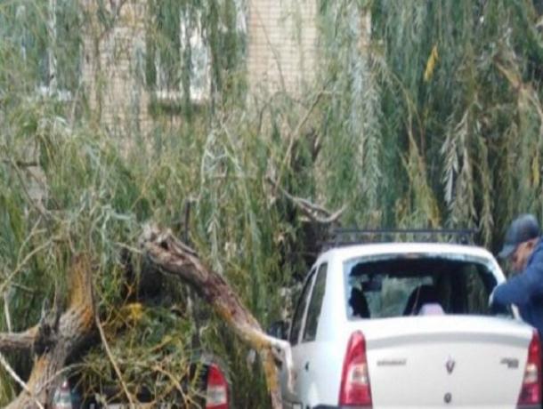 Огромное дерево-убийца разбомбило два припаркованных автомобиля в Ростовской области
