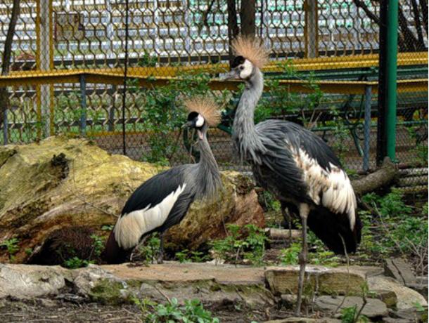 Зоопарку Ростова-на-Дону подарили кенгуру ижуравлей