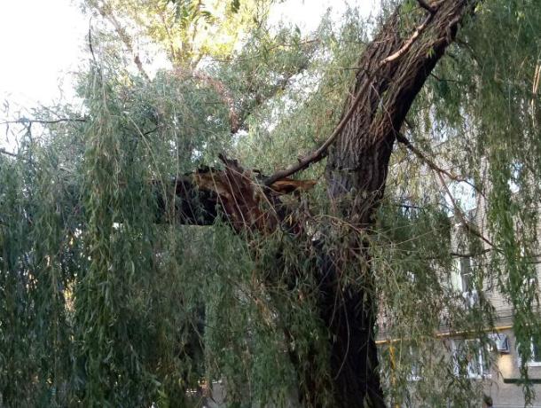 Рухнувшее на провода дерево оставило без света сотни жителей Батайска Ростовской области