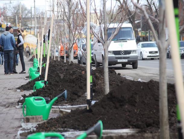 ВРостовской области сегодня посадили практически 400 тыс. деревьев икустарников