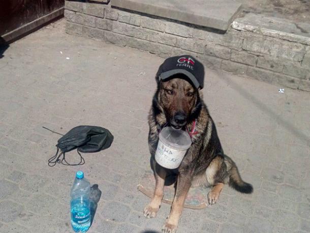 Модную собаку-попрошайку сняли на фото посетители центрального рынка в Ростове