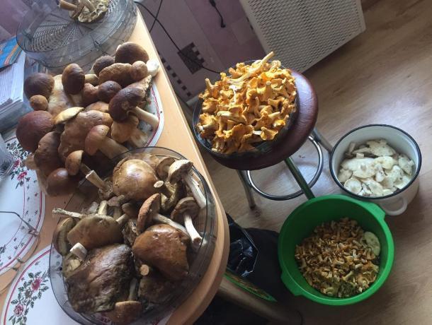 В трех районах Ростовской области зафиксированы отравления грибами